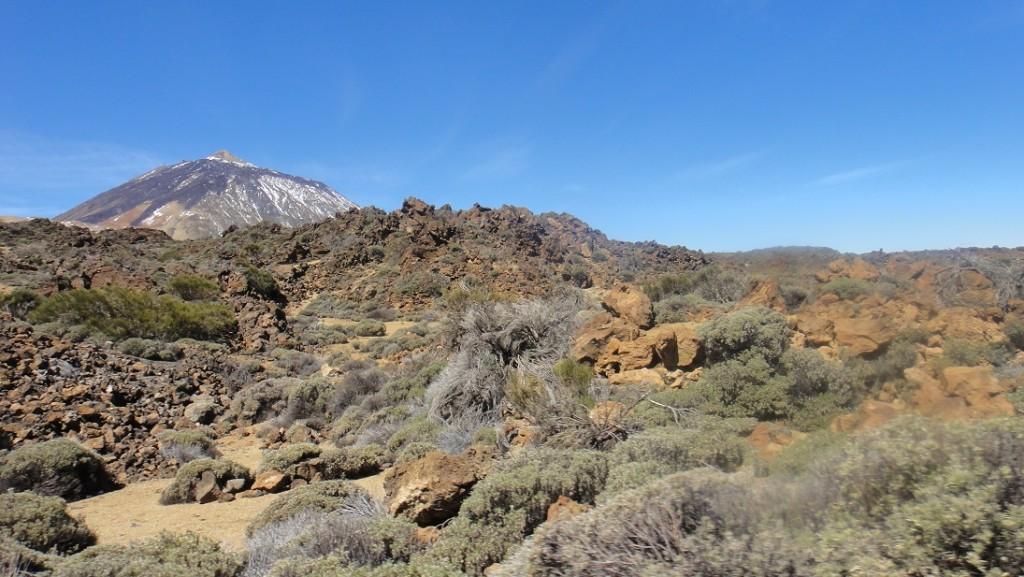 火山特有的植被