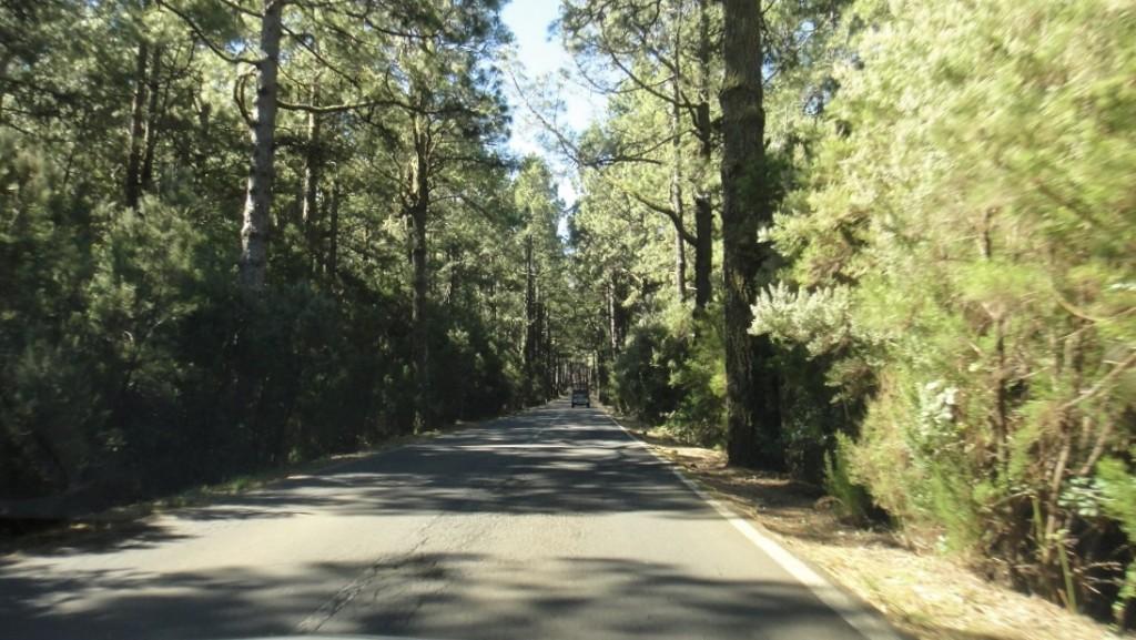 開上 TF-24 公路,很快就離開市區,進入翁翁鬱鬱的森林了
