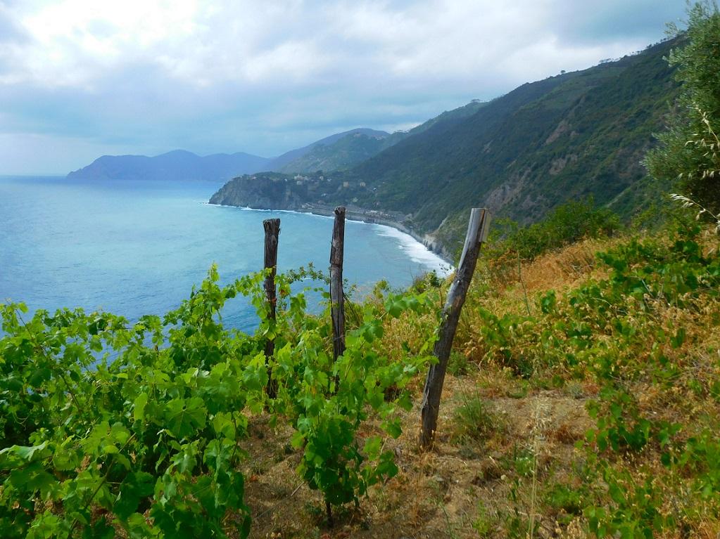 葡萄園後映襯著湛藍的大海,陽光下,感受到這土地的豐饒