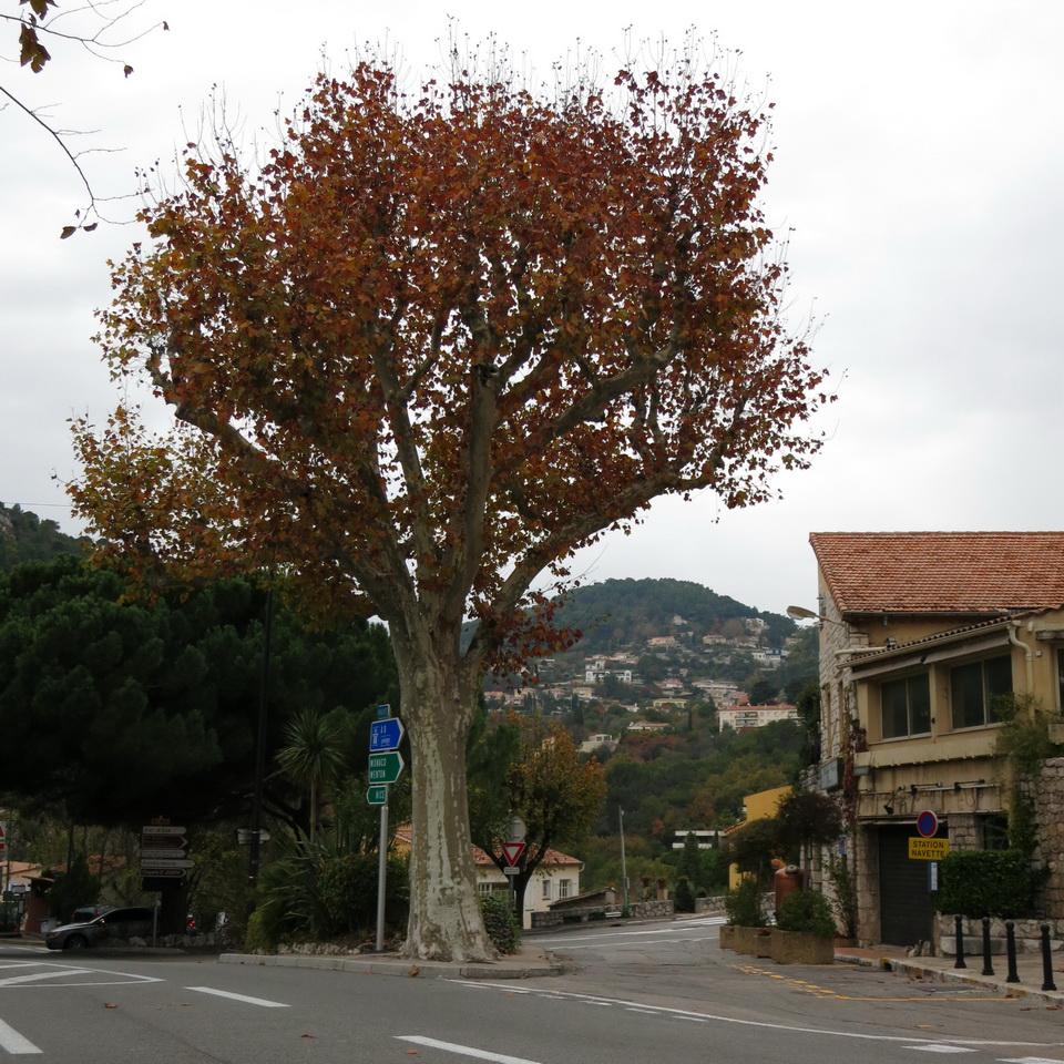 南法EZE (6)
