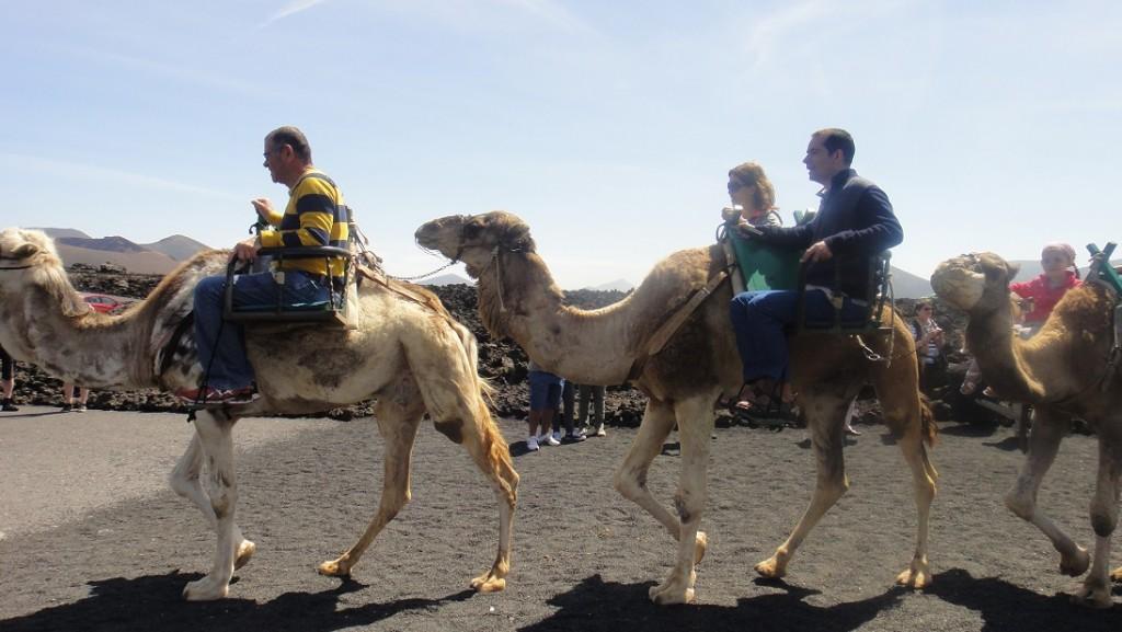 一隻駱駝可以載兩個人,上下駱駝的時候,有點刺激喔~