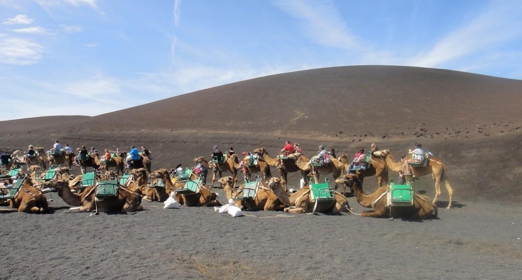 在火山砂礫中騎駱駝,也是一種蠻特別的經驗 ^^