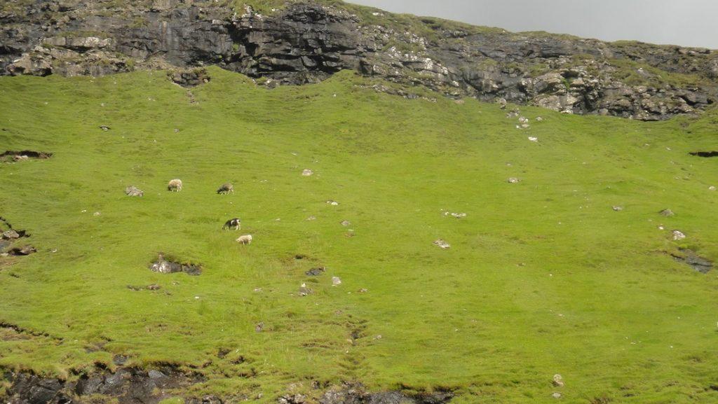 還是羊的體積最大,最好認 ><