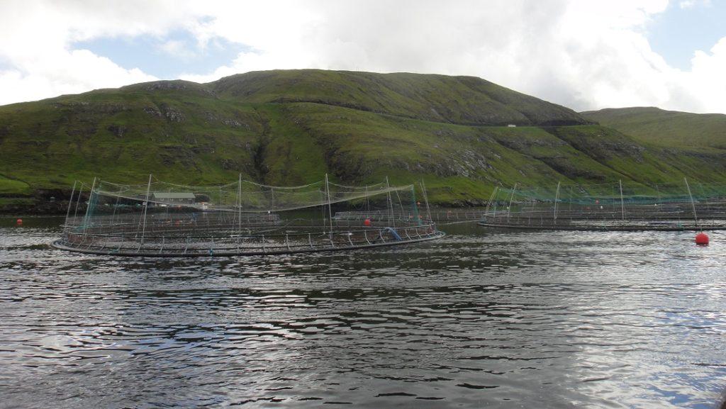 養殖鮭魚的裝置