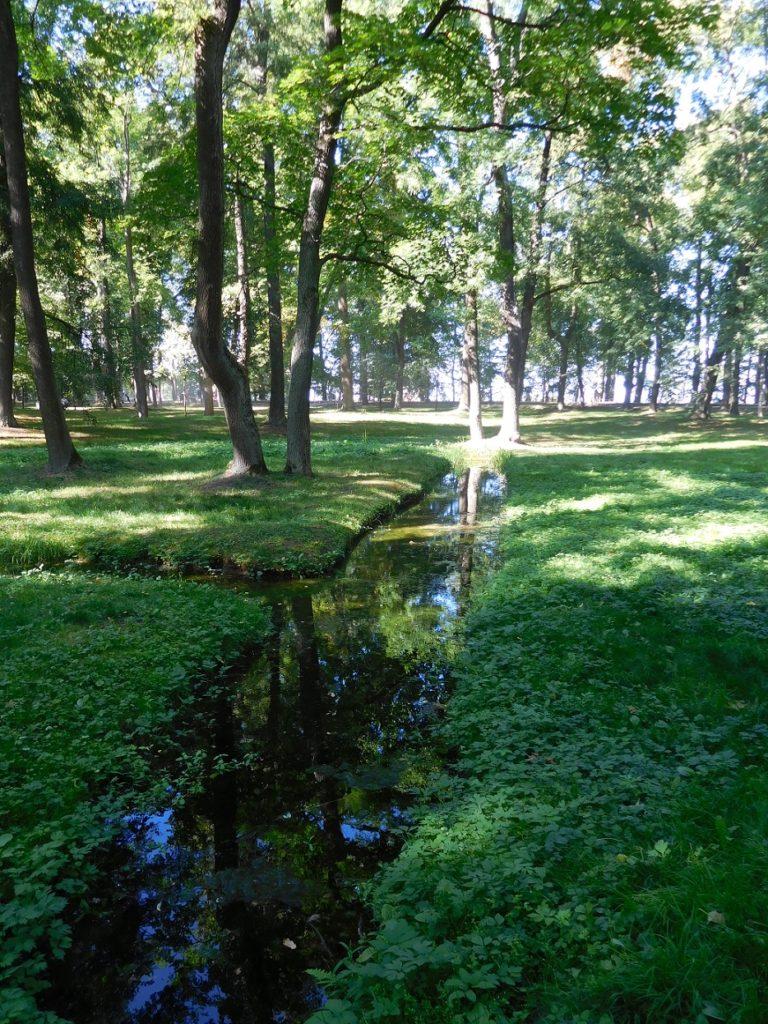 令人放鬆的森林和潺潺流水